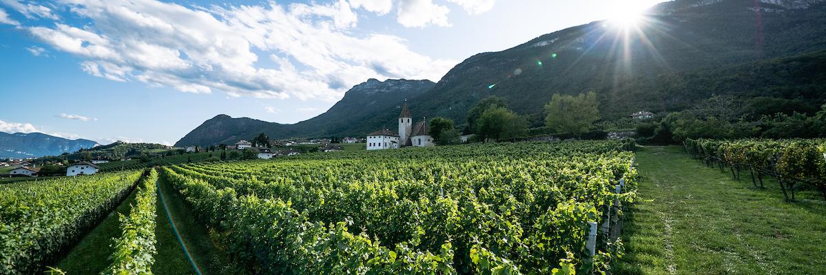 Kellerei Schreckbichl Südtirol - Cantina Colterenzio Alto Adige